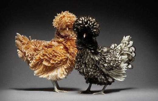24张来自摄影师 Moreno 拍摄的史上最美情侣鸡写真照