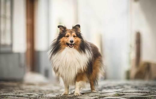 摄影师 Nikol Kopp 拍摄的生活在城市中的狗